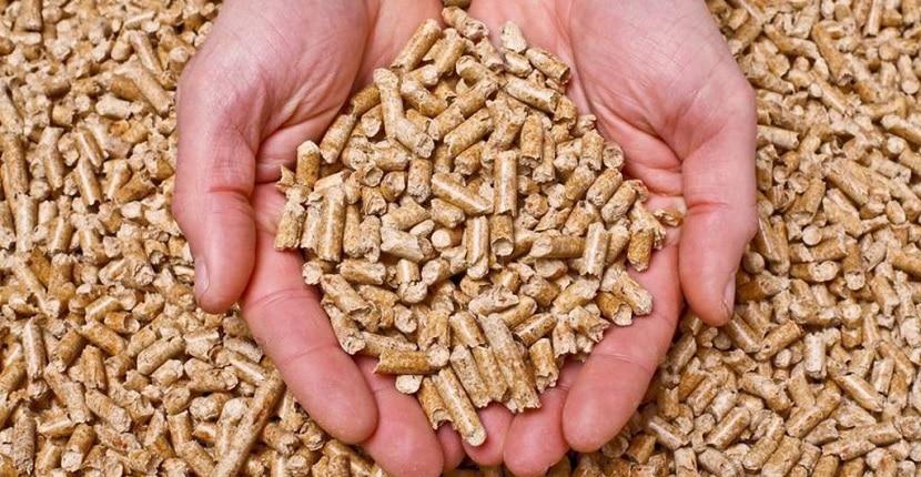 Imagen de un puñado de pellets